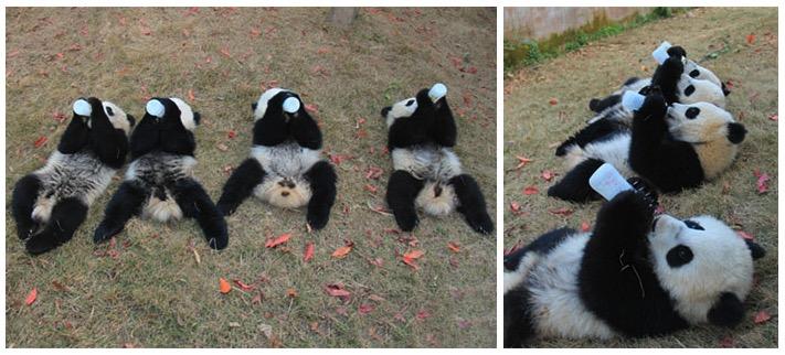 mj-godupdates-panda-daycare-4
