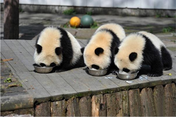 mj-godupdates-panda-daycare-5