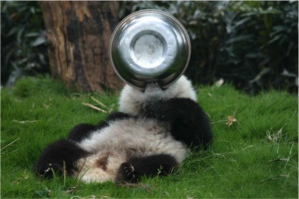 mj-godupdates-panda-daycare-6