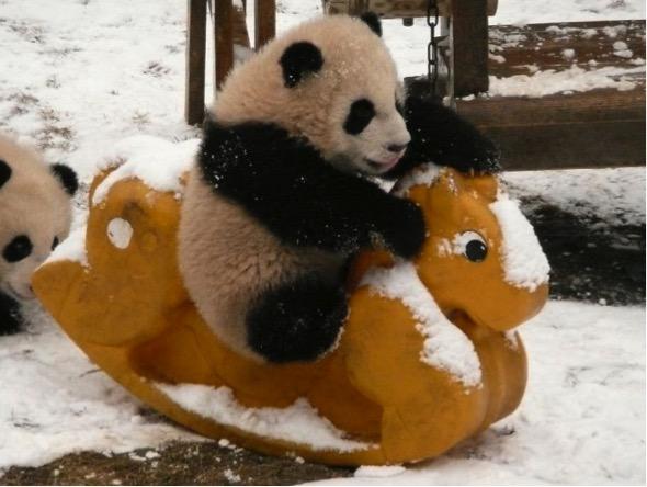 mj-godupdates-panda-daycare-7