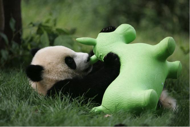mj-godupdates-panda-daycare-8