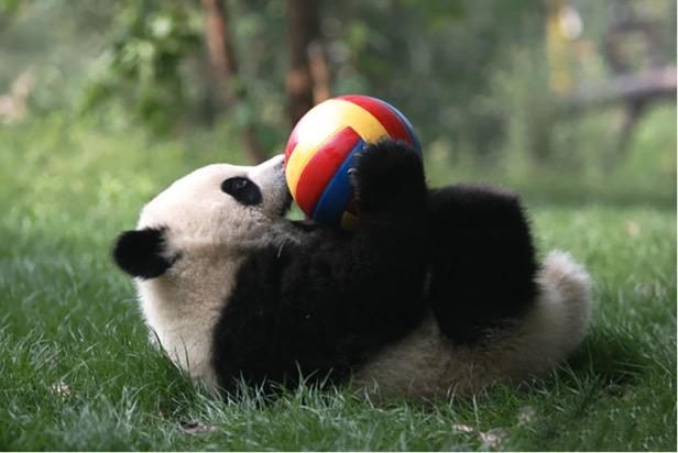 mj-godupdates-panda-daycare-9
