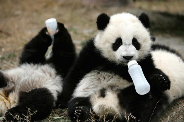 mj-godupdates-panda-daycared-3