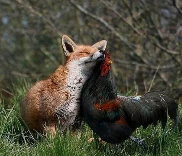 mj-godupdates-unlikely-animal-pairs-4