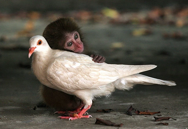mj-godupdates-unlikely-animal-pairs-5