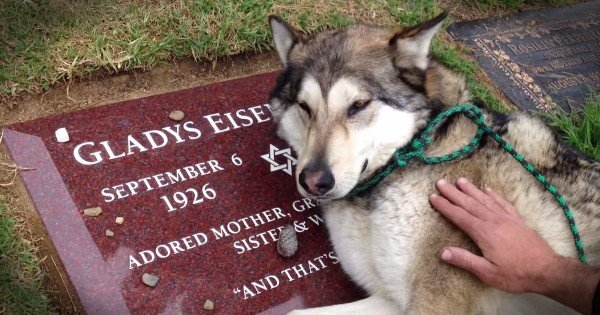 Heartbroken Loyal Dog Cries On Owner's Grave