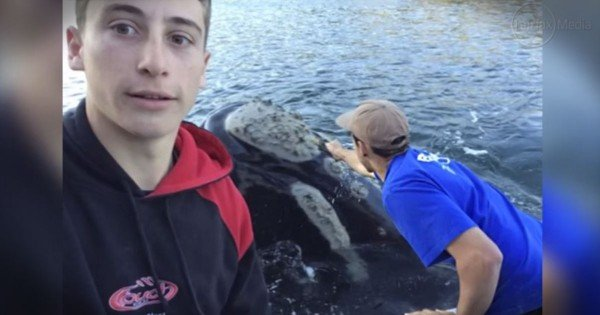 They Answered This Whale's Plea For Help, And His 'Thank You' – STUNNING
