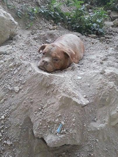mj-godupdates-dog-buried-alive-1
