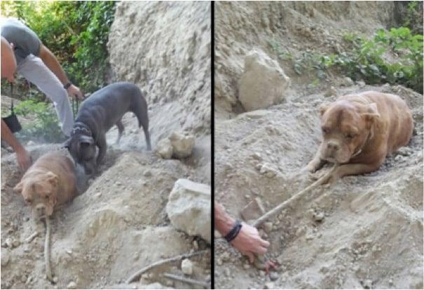 mj-godupdates-dog-buried-alive-2