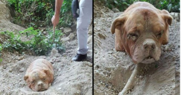 When He Found Her Buried Alive In The Dirt, My Blood Ran Cold. What A Miracle!