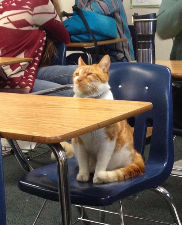 godupdates-cat-student-1