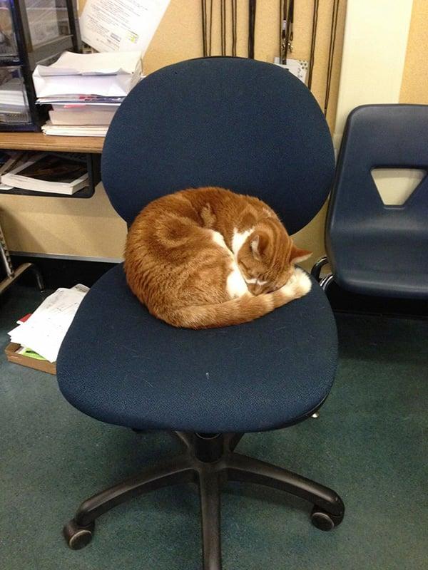 godupdates-cat-student-3