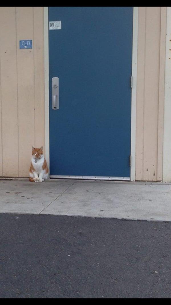 godupdates-cat-student-4