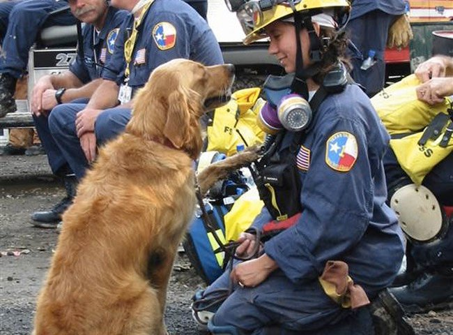 mj-godupdates-911-rescue-dog-honored-2