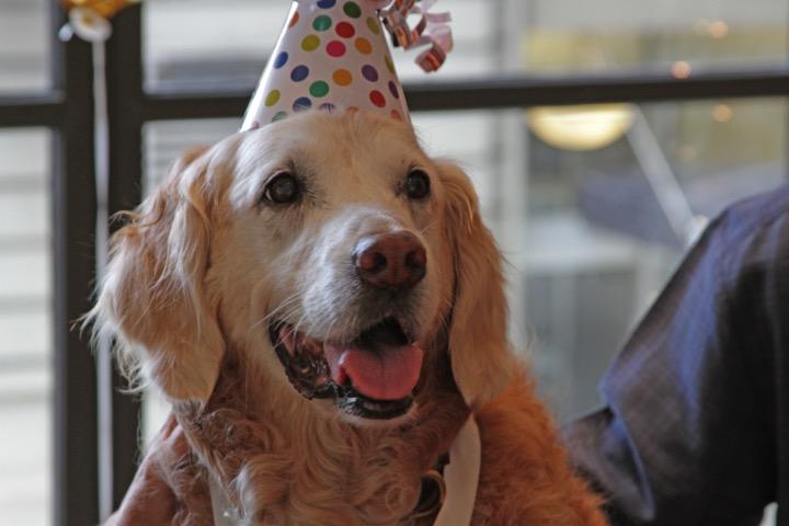 mj-godupdates-911-rescue-dog-honored-4