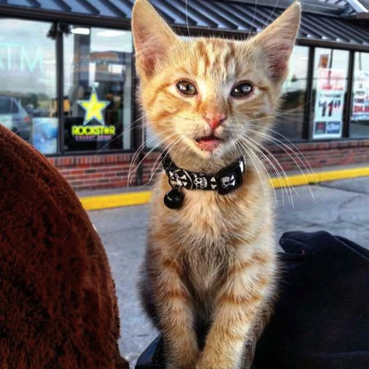 mj-godupdates-biker-rescues-kitten-3