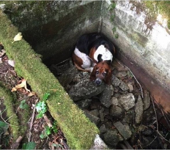 mj-godupdates-dog-stuck-in-well-1