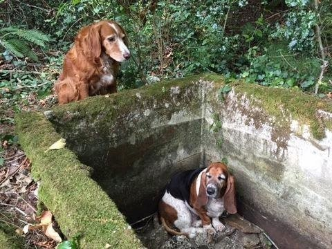 mj-godupdates-dog-stuck-in-well-3