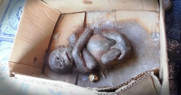 Baby Orangutan Found In Cardboard Box Gets Amazing Rescue