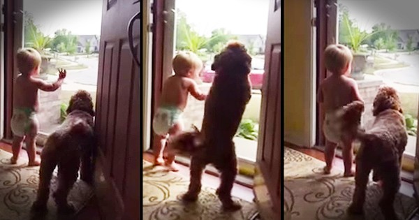 Dad Gets Welcomed Home By Baby Boy And Dog
