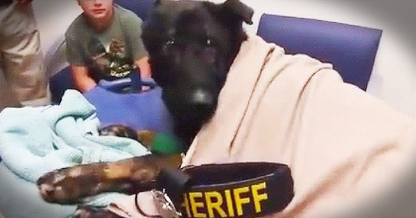 Heroic Police Dog Hears His Last Call