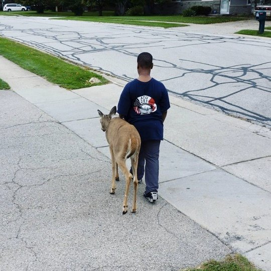 mj-godupdates-boy-helps-blind-deer-1