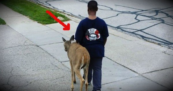 10-Year-Old Boy Shows Incredible Compassion To A Blind Deer