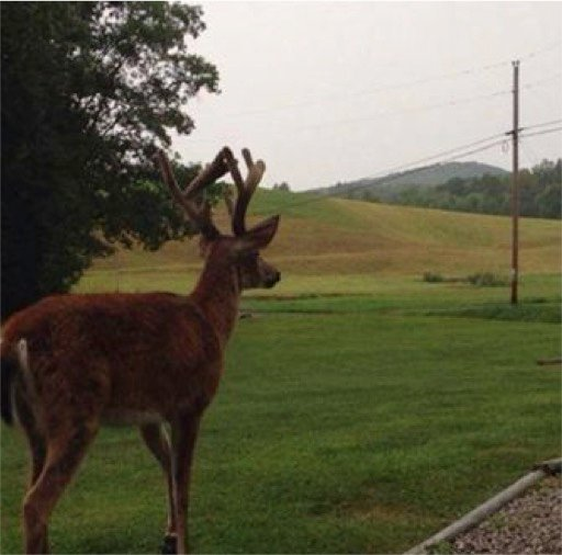 mj-godupdates-deer-visits-dying-dad-4