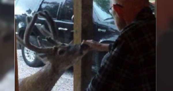 Her Dad Was Dying, And God Sent A Deer As A Special Messenger