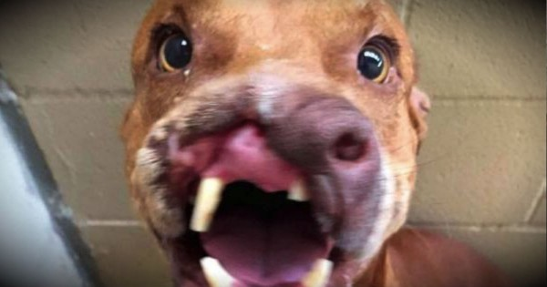 This Dog May Only Have Half A Face. But His Big Heart Will Melt Yours!