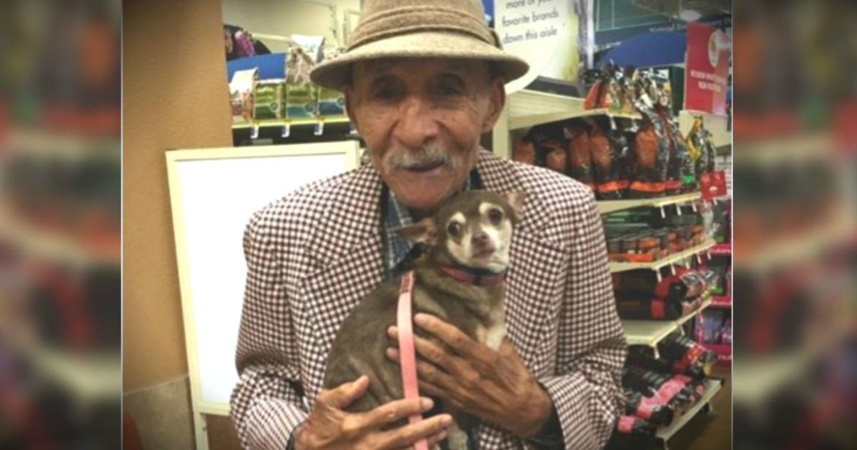 veteran and chihuahua adorable pair
