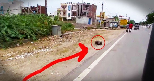 Dog Gave Up On Life Until This Touching Rescue