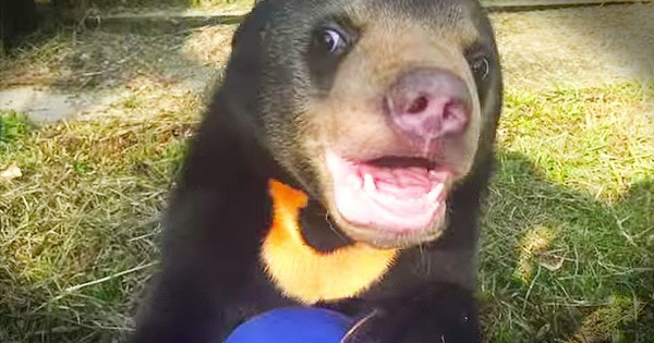 Orphaned Bear Cub Sees A Play Area For The First Time – TEARS!
