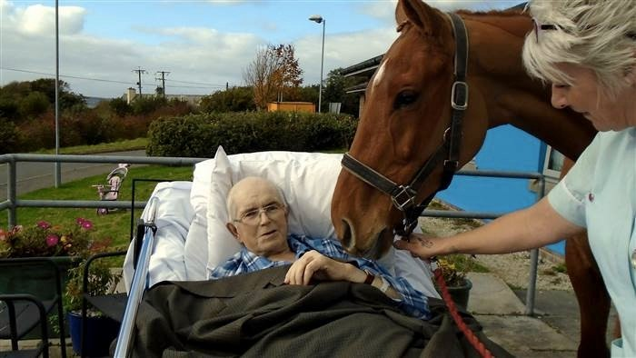 mj-godupdates-dying-man-surprised-with-goodbye-from-beloved-horse-2