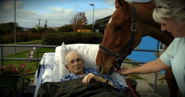 Nurses Surprise Dying Man With One Last Goodbye To His Beloved Horse