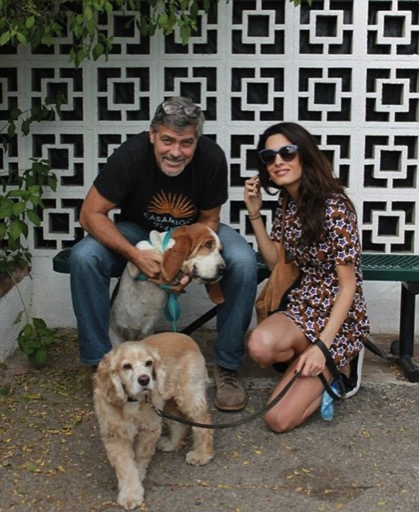 mj-godupdates-george-clooney-rescues-hound-dog-3