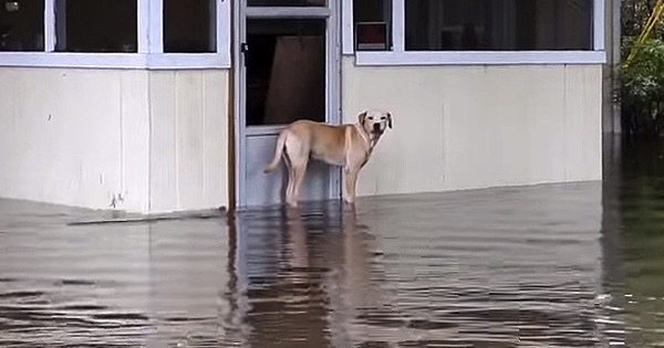 mj-godupdates-lucky-the-dog-rescued-in-flood-1