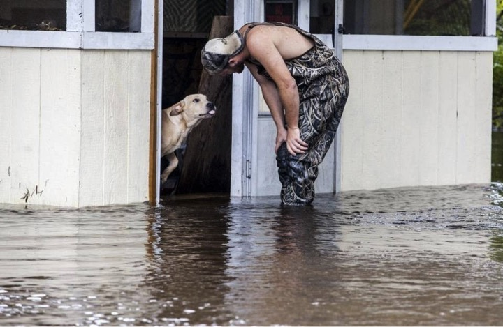 mj-godupdates-lucky-the-dog-rescued-in-flood-3