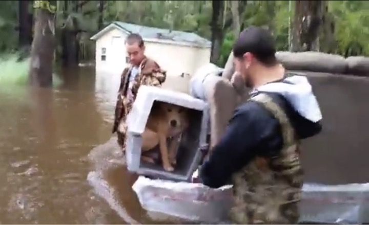 mj-godupdates-lucky-the-dog-rescued-in-flood-4