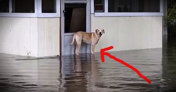 He Was Left For Dead In The Flood. But A Kind Stranger Came To The Rescue!
