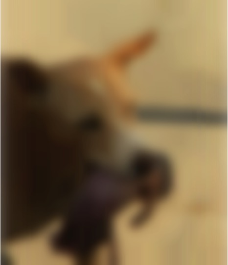 mj-godupdates-stray-dog-carries-abandoned-newborn-in-mouth-1-blurred