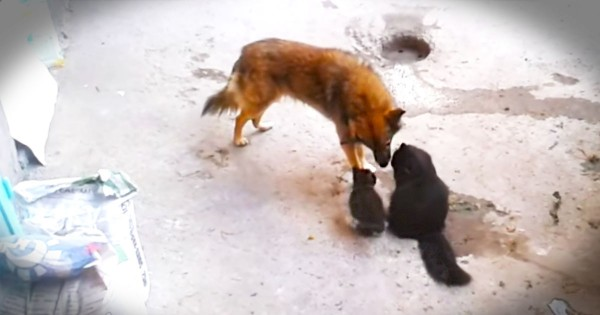 Cat Takes Her Kittens To Meet An Old Friend…And It's Precious