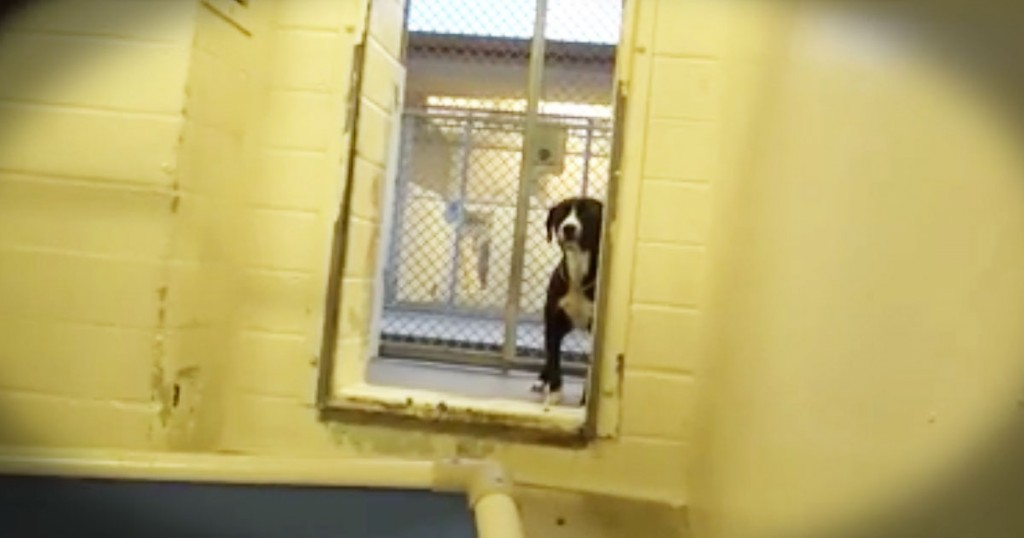 jd-godvine-shy dog benny gets adopted-FB