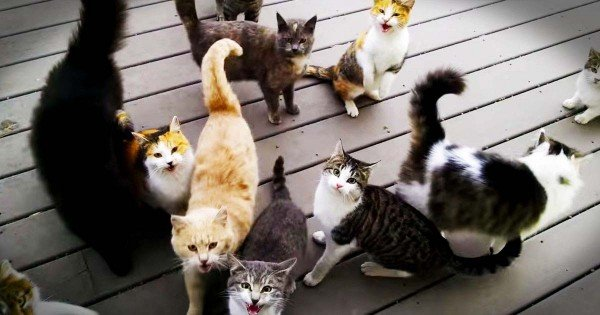 Man Greeted Every Morning By Tons Of Cats