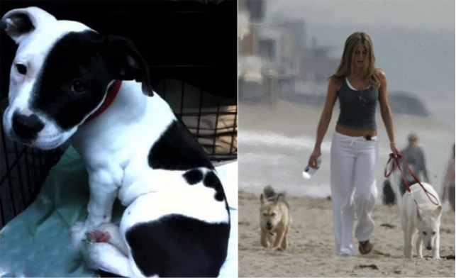 godupdates 11 celebs with rescue dogs 7