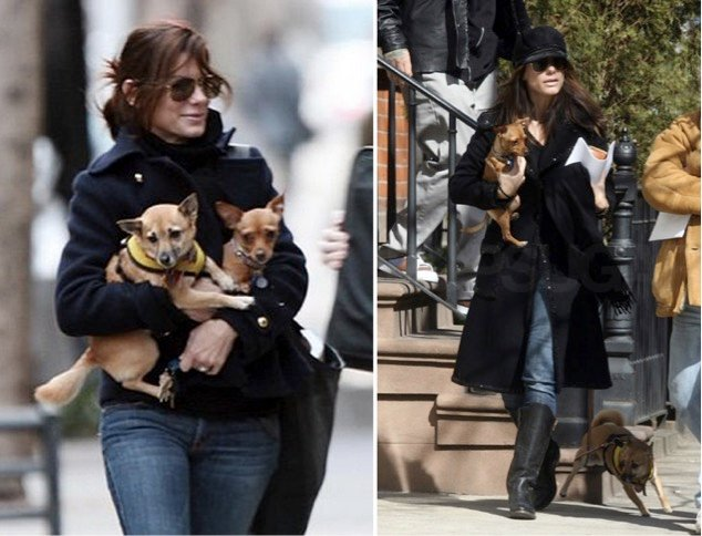 godupdates 11 celebs with rescue dogs 6