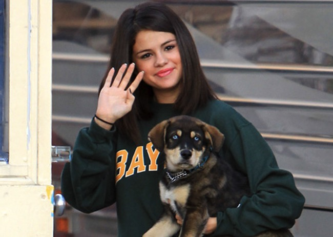 godupdates 11 celebs with rescue dogs 1