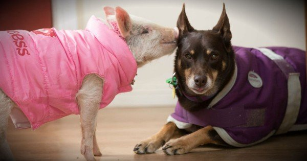 Failed Sheepdog's Second Chance Proves That Love Wins