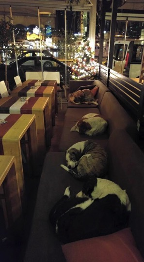 mj-godupdates-greek-cafe-opens-doors-to-stray-dogs-1