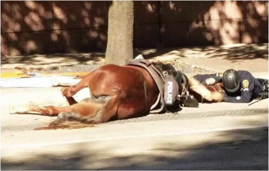 mj-godupdates-officer-lies-in-street-with-dying-patrol-horse-3